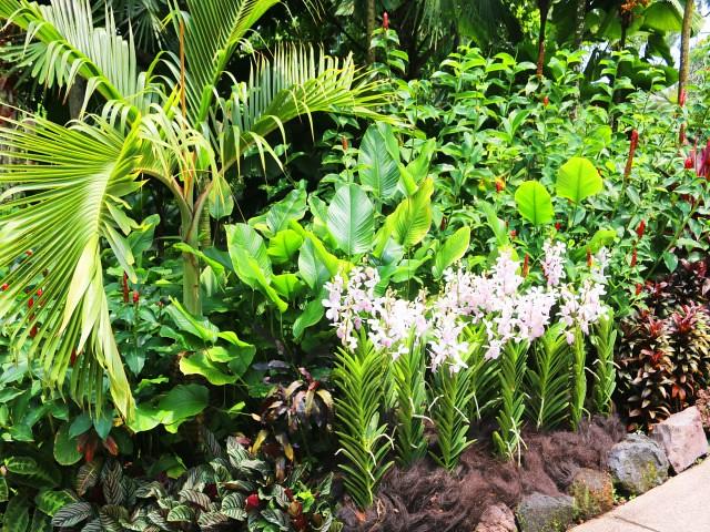 gradina orhidee Gradini si Parcuri din Singapore 3
