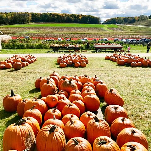 pumpkinfarm8-1017