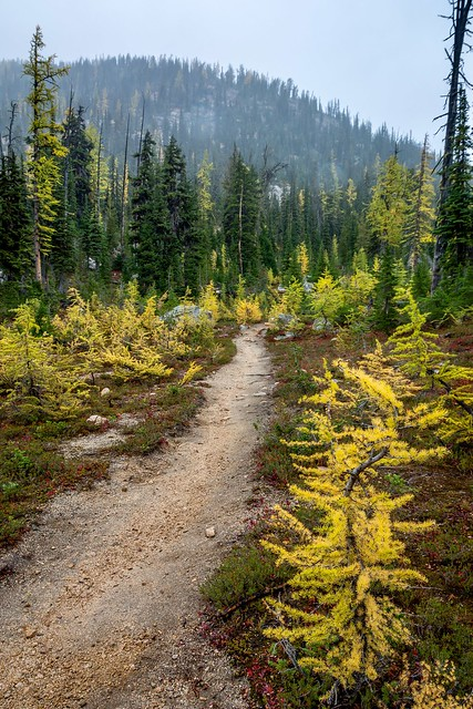 Trails of gold II. Cutthroat Pass Trail, North Cascades National Park