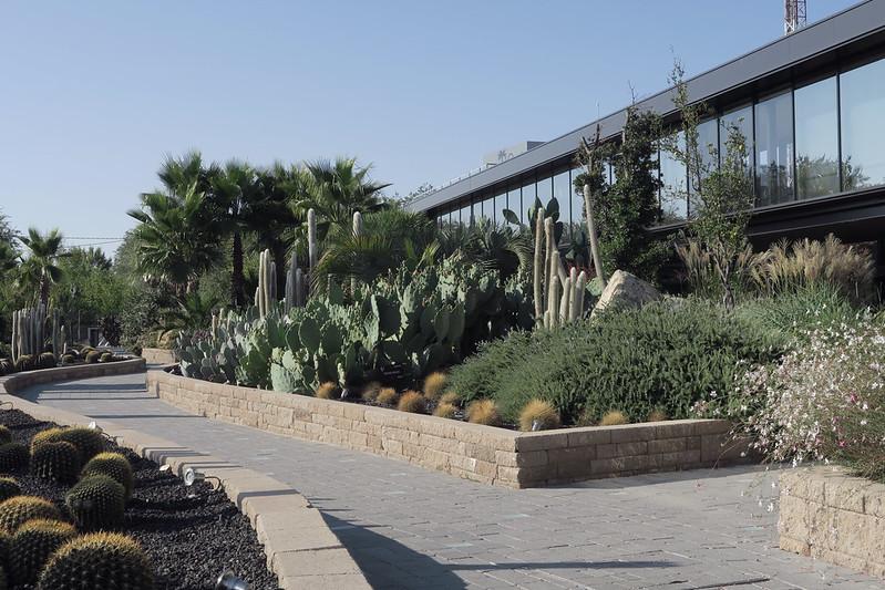 Desert City