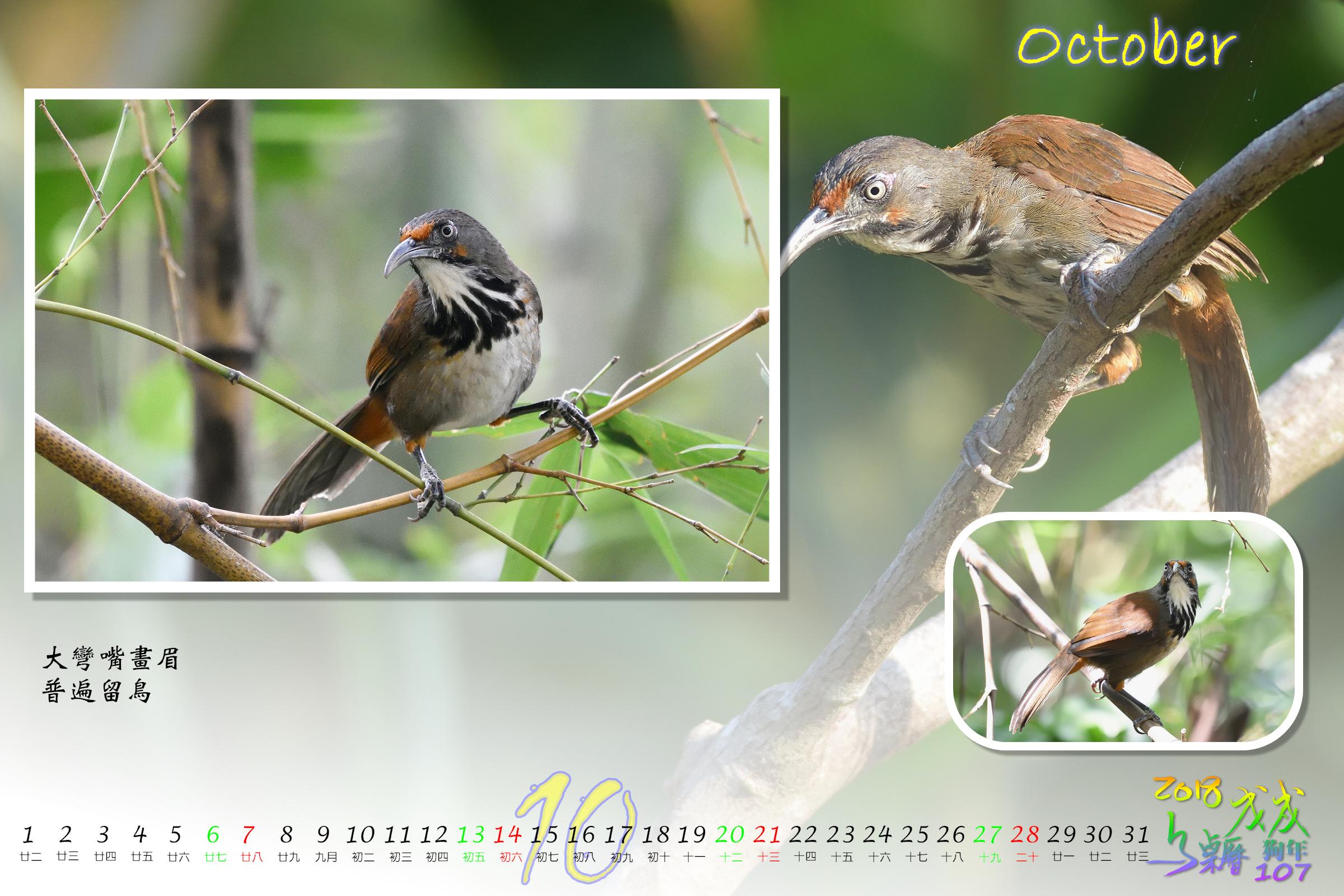 Calendar2018_Alder2_10