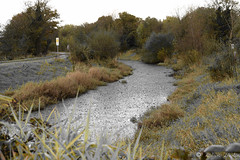 Strabane Canal 4 Nov 2016 DSC_0294