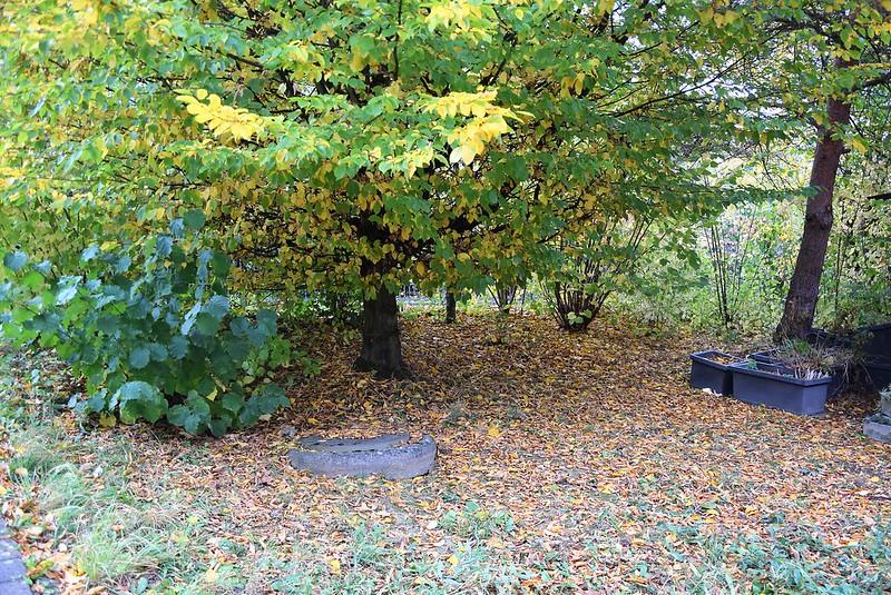 Autumn Leaves 22.10 (9)