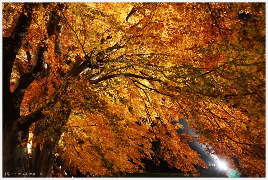 紅葉迴廊-紅葉祭-夜楓-16