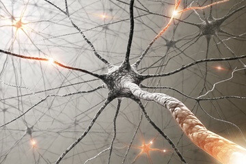 Eficiencia Neuromuscular