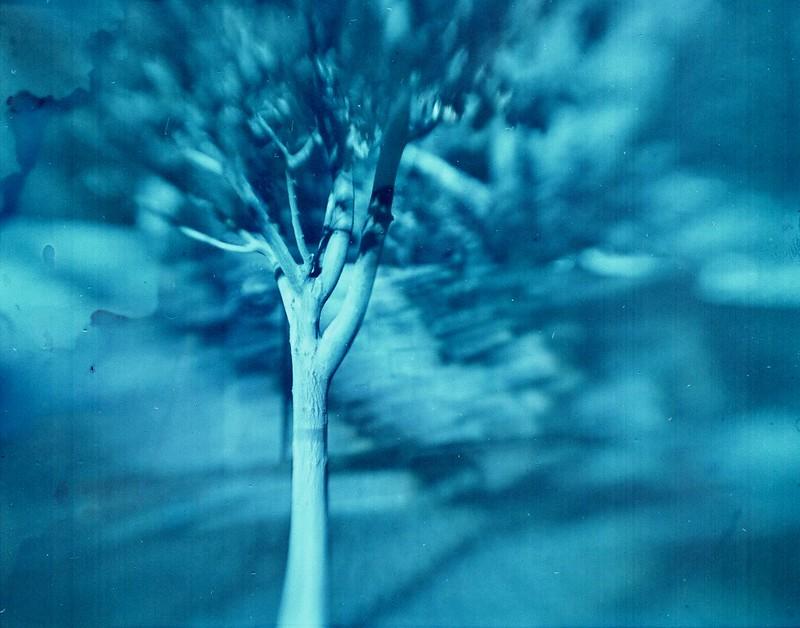 Tree Test001 (1)