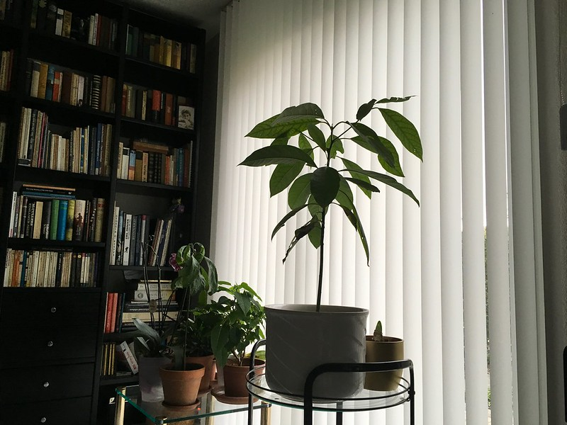 Living room plants
