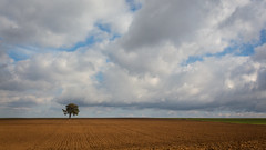 Lonely tree - Photo of Vebron