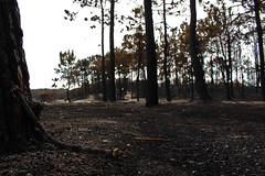 Wildfire Aftermath II