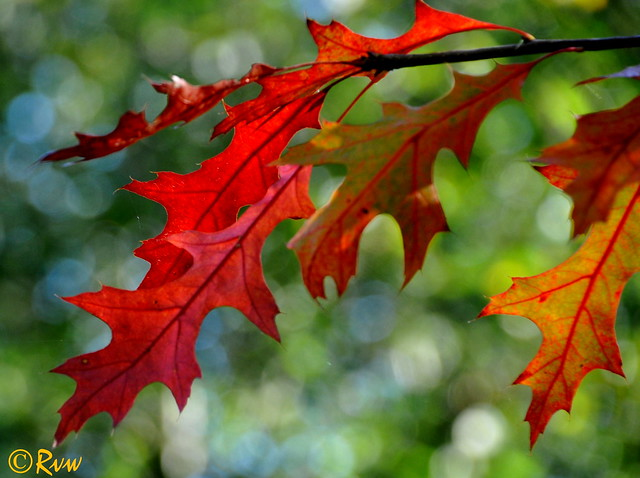 October leaves (Explore 28/10/ 2017), Nikon D300S, AF-S DX Nikkor 18-300mm f/3.5-6.3G ED VR