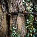Tree eating iron - LR6-310507-web