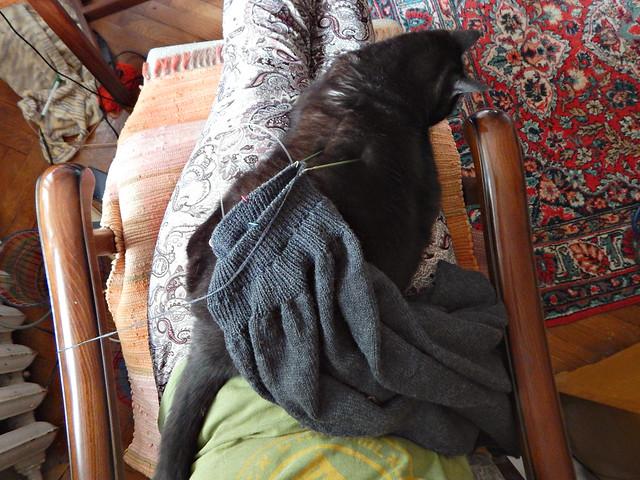 Чёрный кот Муся на коленях | Musia the black cat sitting on my lap