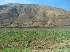 Arid upland landscape