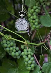 Fine Wine Time