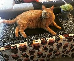 Thank you, human for the nice Halloween decorations. I'll cover them now. #halloweendecor #GingerCat #OrangeCat #OrangeTabby #Cat #kitty #OrangeTabbyCat #Cats #kittycat #OrangeCatsRule #CatsOfInstagram #Catstagram #catsagram #ネコ #ねこ #猫 #neko #garfieldcat