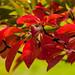 Benmore Gardens 20171012-22.jpg