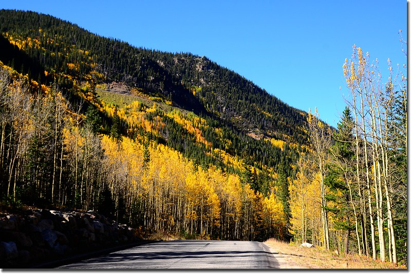 Fall colors, Guanella Pass, Colorado (40)