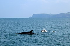Dolphin Survey Trip Sept 2017