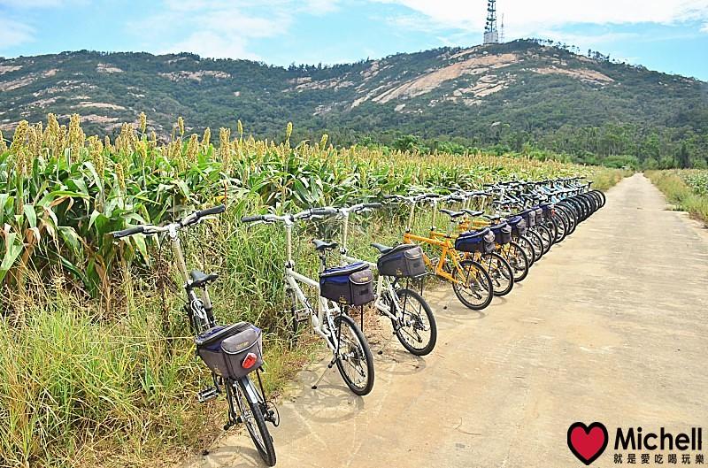 騎單車暢遊紅高粱田