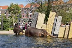 Amsterdam - Zoo