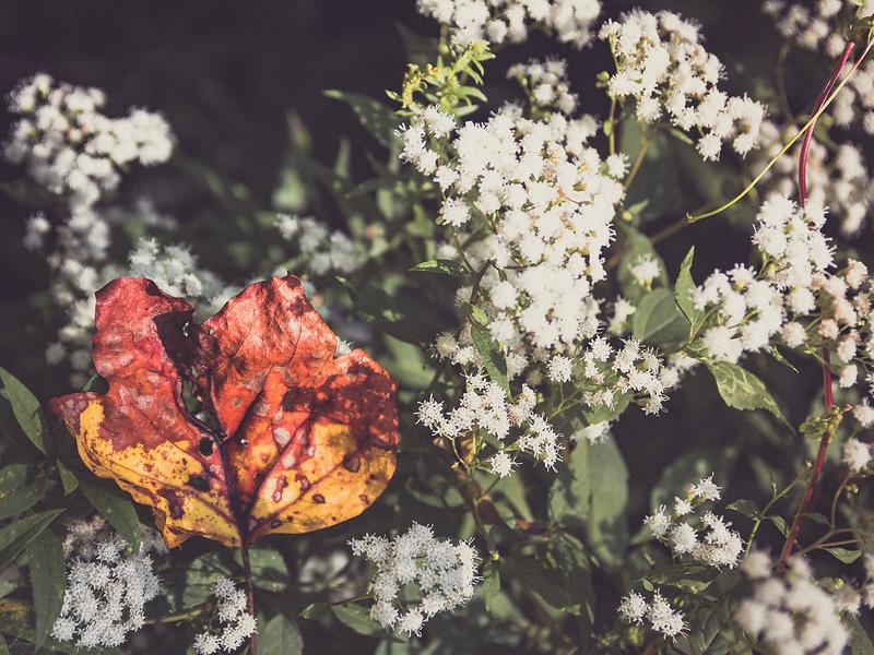 fall-4