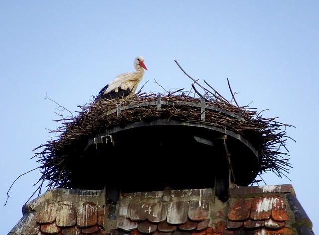 Stork nest on the, Sony DSC-HX90V, Sony 24-720mm F3.5-6.4