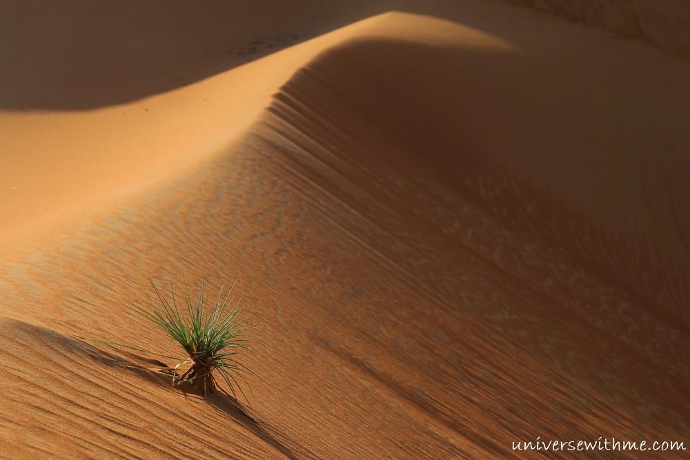 Oman_078