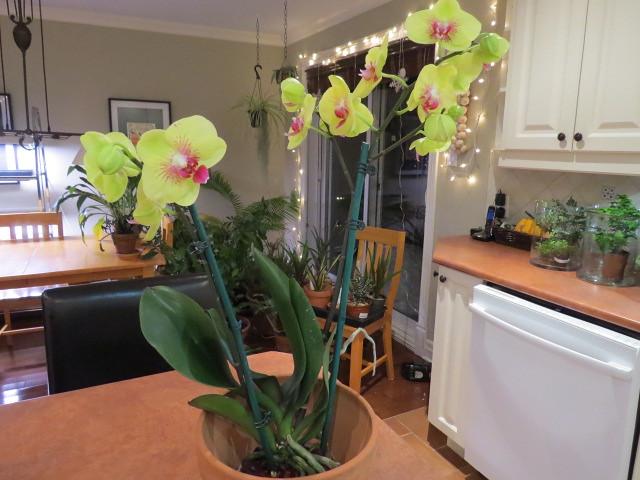 Orchidées chez lavandula - Page 2 37527387920_45c5c31a03_z