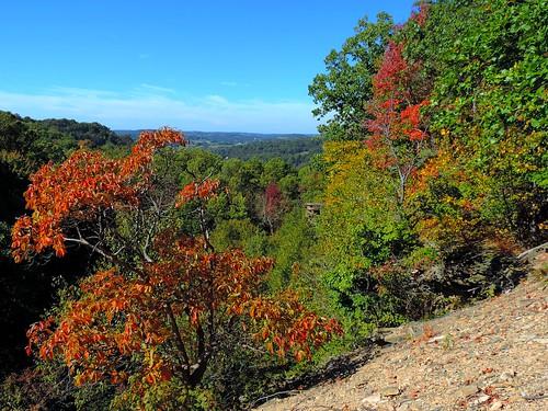 fall autumn foliage october nature outdoors mountains laurelhighlands fayettecounty pennsylvania trees woods colorful leaves dunbar stategamelands51 hillside