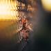 Autumnal Fence Story by der_peste (on/off)