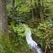 Skelghyll Wood, Ambleside  1