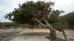 Wind sculpture of tree