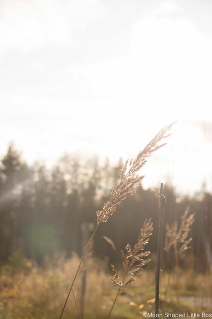 Kaunis Syksy 2017 syysaurinko Polvijärvellä aurinko maisema luonto