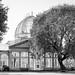 Syon House & Gardens -23 16102017-Edit.jpg