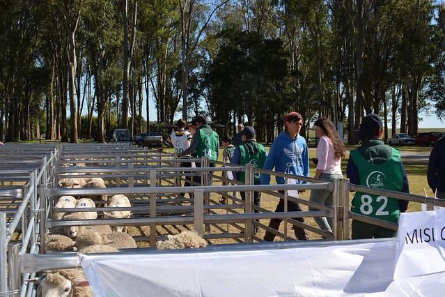 7° Concurso de Cordero Pesado de las Sierras del Este