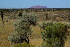 find the Great Uluru in the desert
