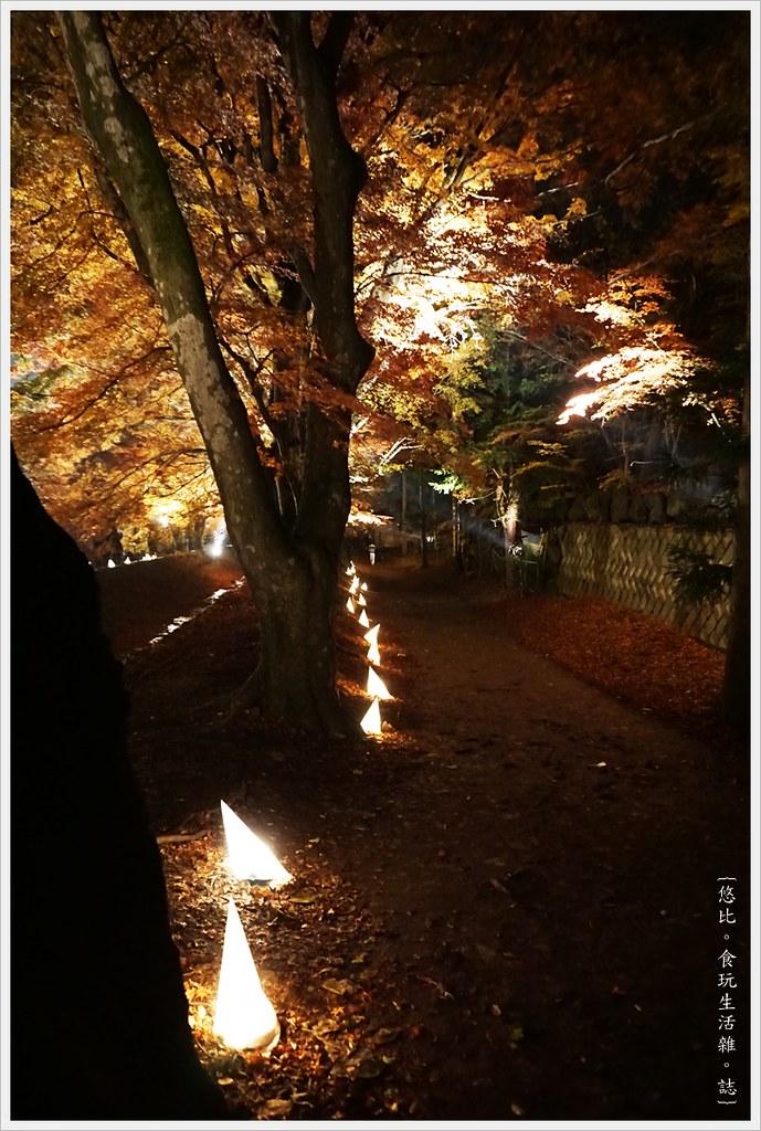 紅葉迴廊-紅葉祭-夜楓-37