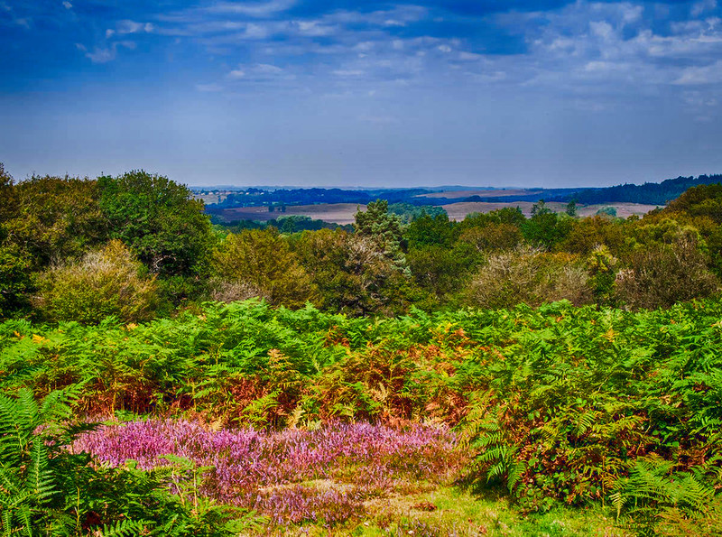 Looking towards Fordingbridge from Milkham Enclosure in the New Forest. Credit Anguskirk, flickr