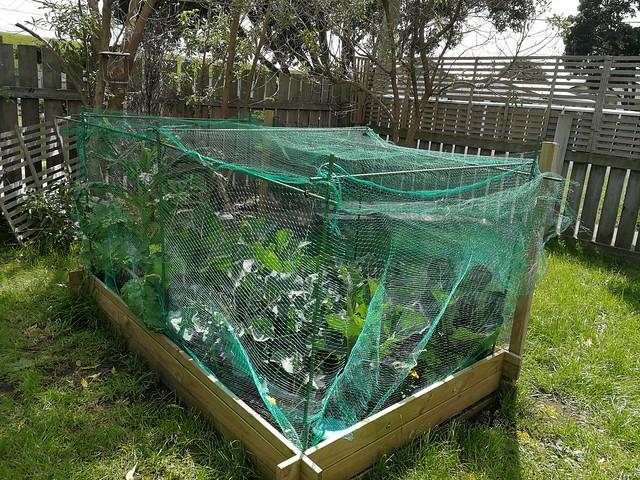 net to stop butterflies