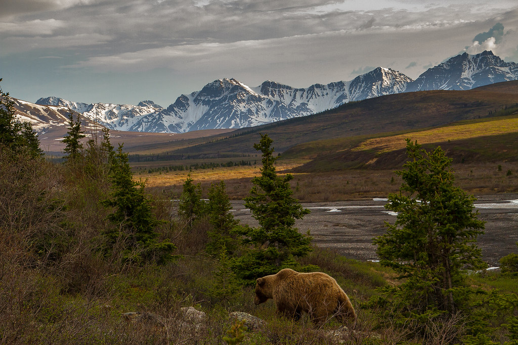 Photographing America: Denali - Cover