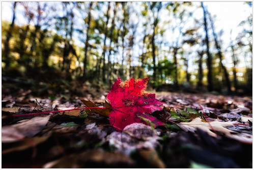 glow october color wormseyeview nature harrimanpark city fall ground red 2017 peakcolor leaf forest autumncolor autumn outdoors sunlight irix landscape colors plants southfields newyork unitedstates us