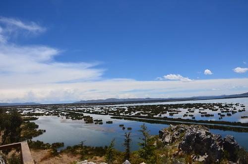 Schilffelder am Buchtausgang von Puno. Mit Durchfahrt für Boote.