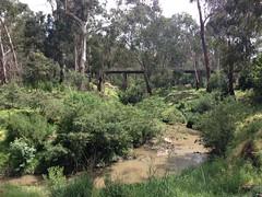 Eltham Rail Trestle Bridge through the trees