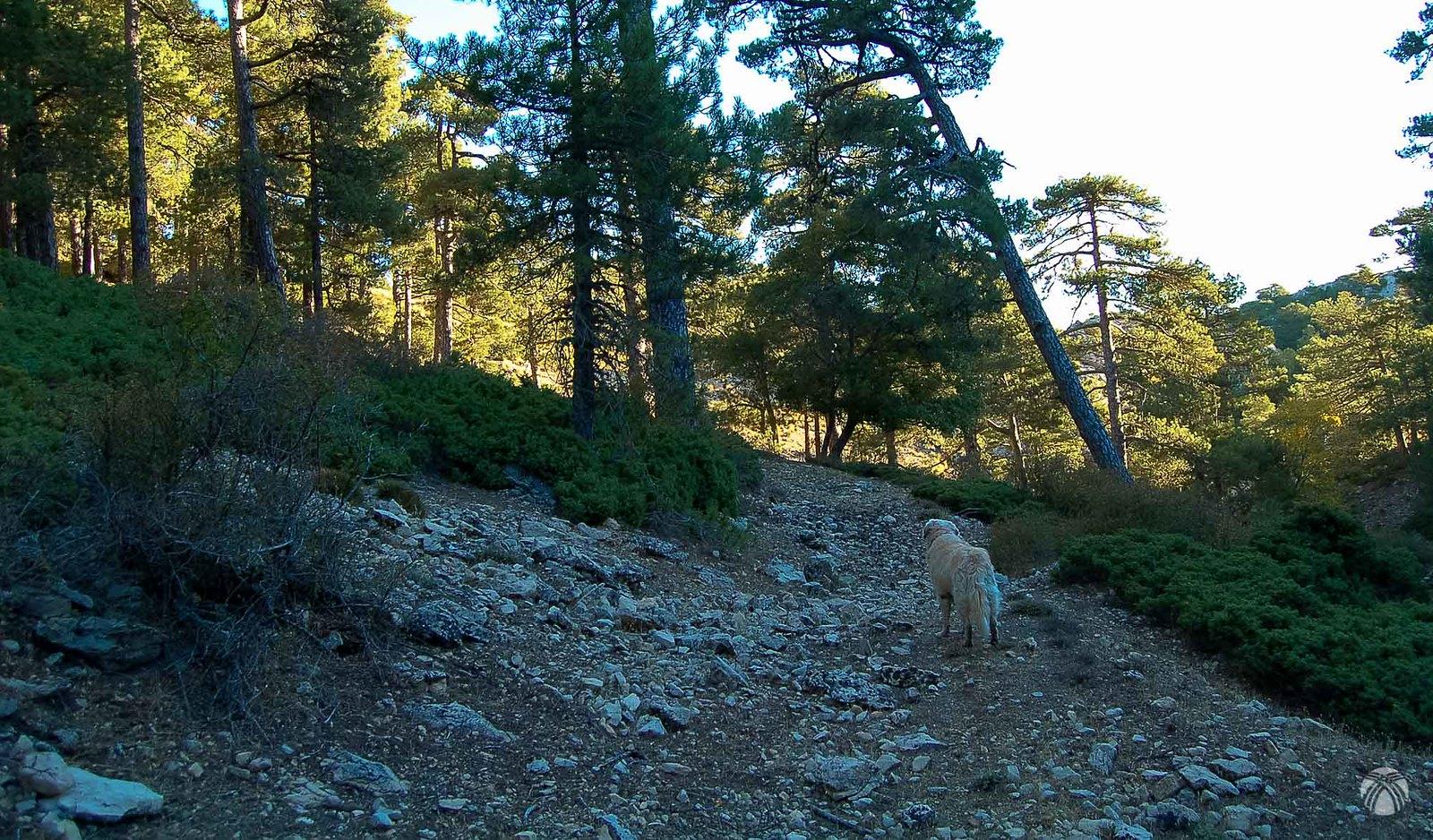 Buscando el camino de Puerto Pinillo