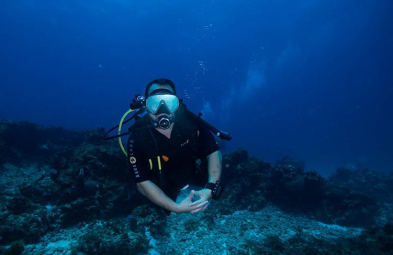 diving (36 de 77)