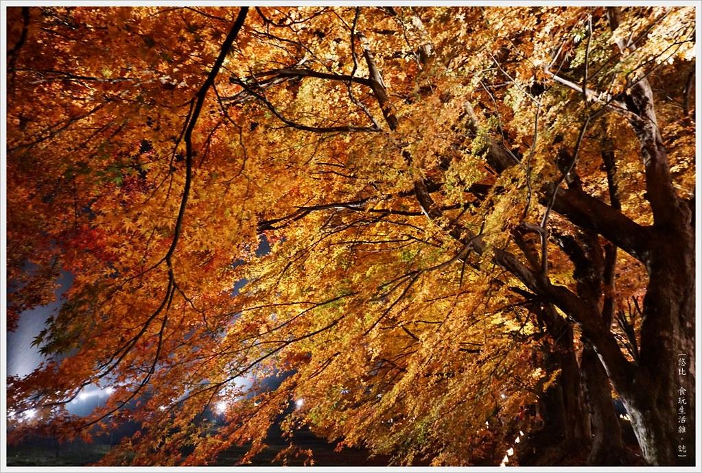 紅葉迴廊-紅葉祭-夜楓-24