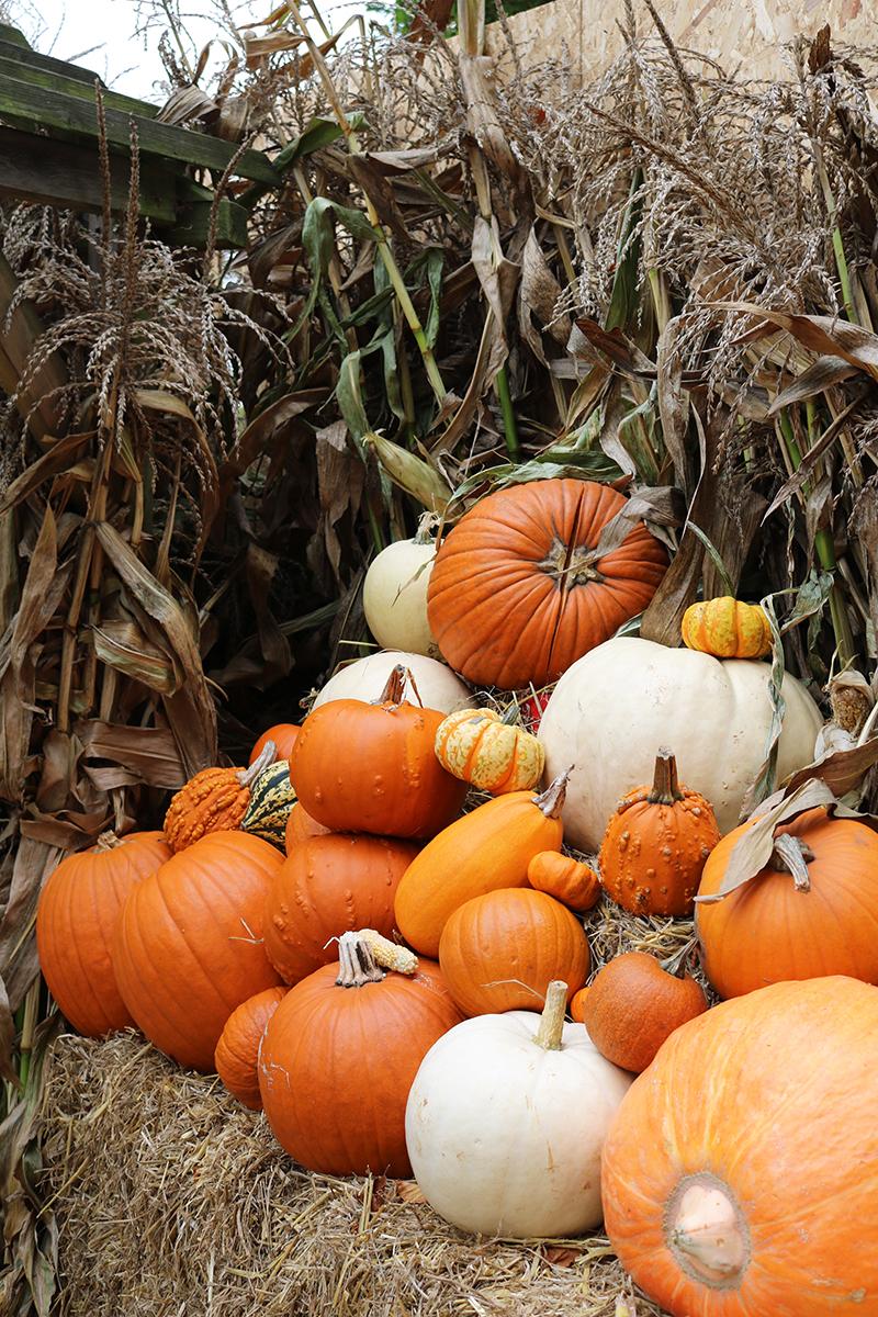 Adora Mehitabel Pumpkin Patch 15