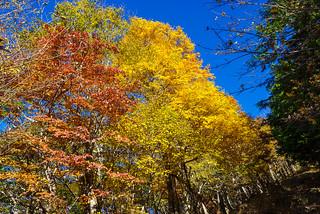 シラジクボへの急斜面・・・序盤はカエデの黄葉