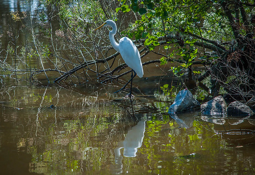 Egret on the Bank