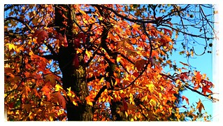 Autumn promises.